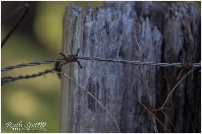 Kangaroo-Valley-NSW
