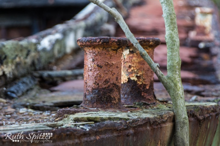 Homebush-Bay-Shipwrecks-Ruth-Spitzer