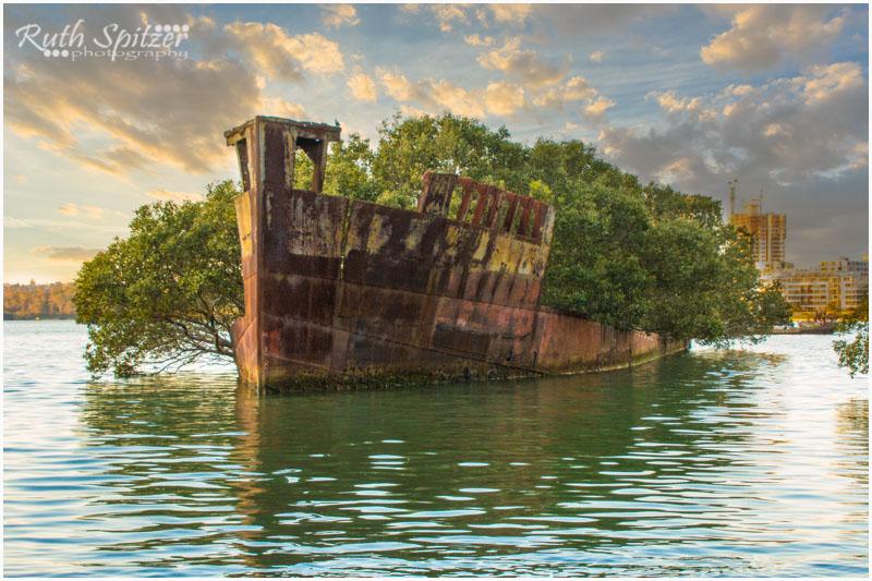 Homebush-Bay-Shipwrecks-Ruth-Spitzer-SS-Ayrfield