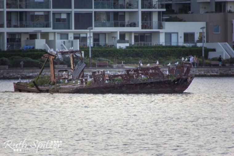 Homebush-Bay-Shipwrecks-Ruth-Spitzer-SS-Mortlake-Bank