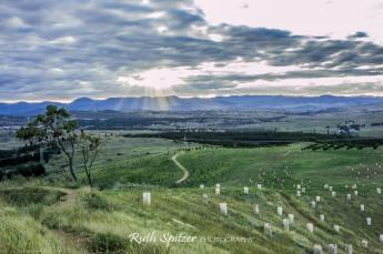 National-Arboretum-Canberra