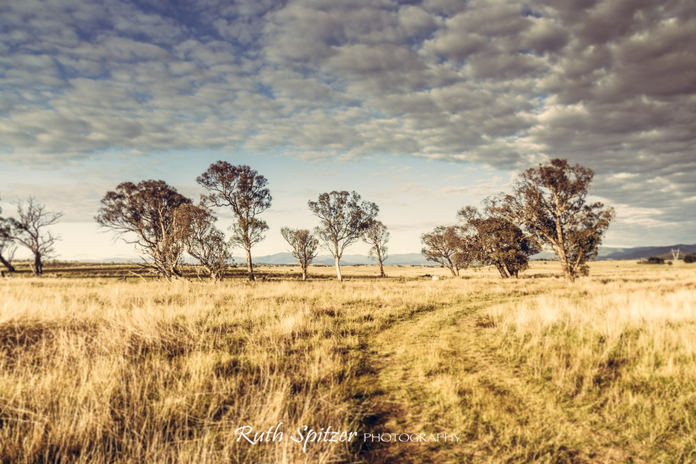 Belconnen-Canberra-countryside