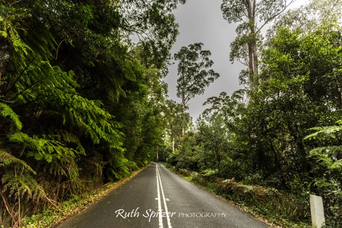 Trees-and-Road-in-Mount-Wilson-Blue-Mountains-NSW