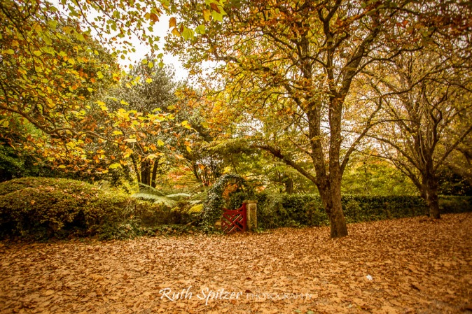 Red-Gate-and-Autumn-Leaves-Mount-Wilson-Blue-Mountains-NSW
