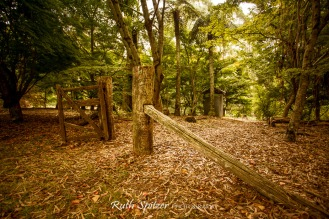 Trees-and-Autumn-Leaves-Mount-Wilson-Blue-Mountains-NSW