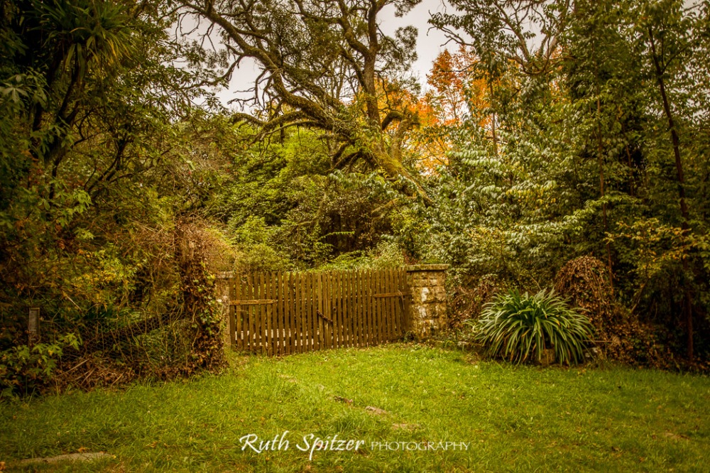 Wood-Gate-and-Autumn-Leaves-Mount-Wilson-Blue-Mountains-NSW