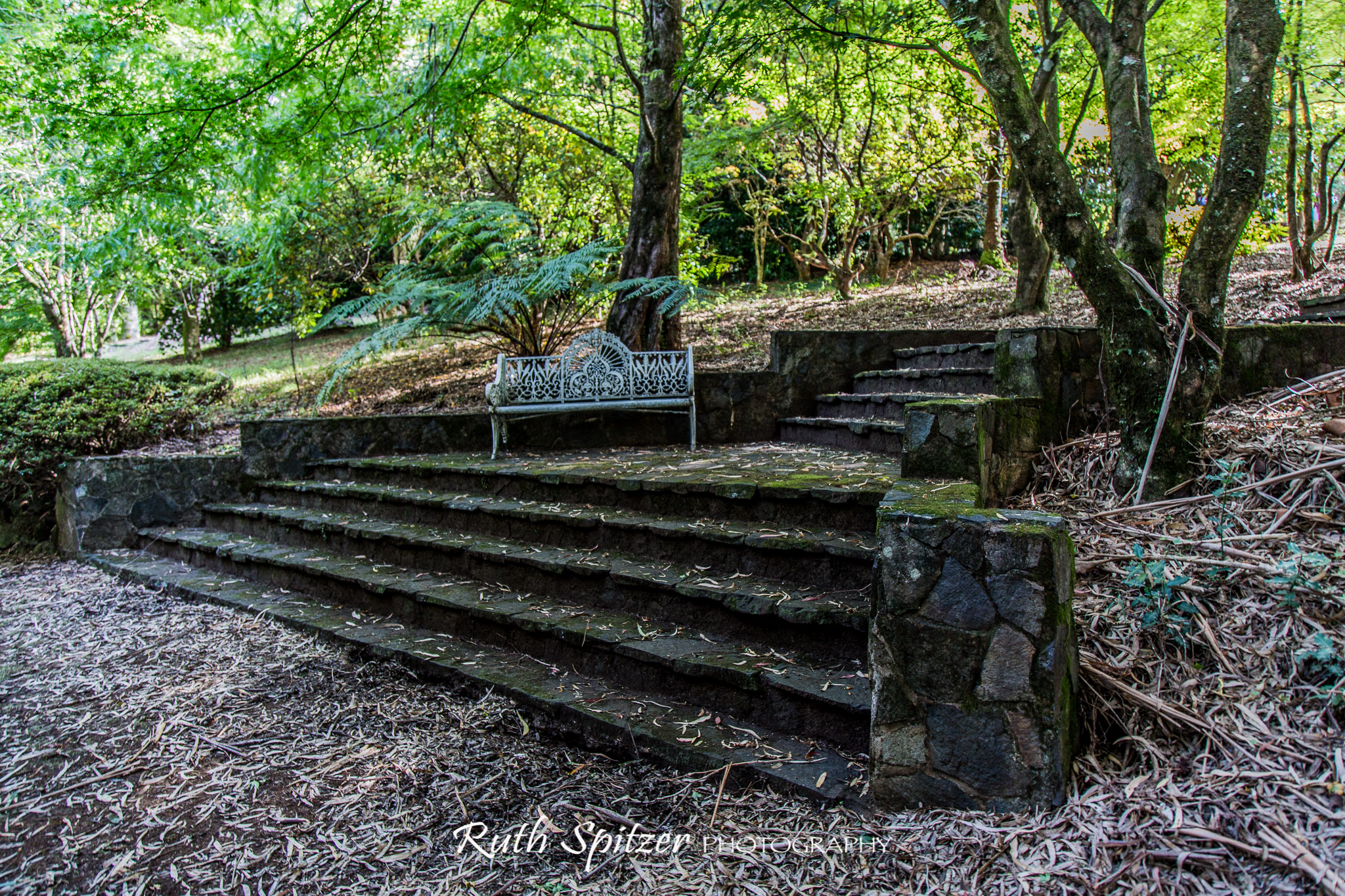Comforting colours of fall in Mount Wilson – Ruth Spitzer